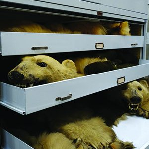 Conservation museum storage solutions