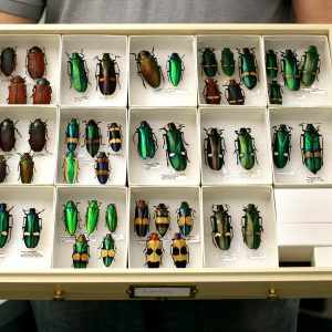 Entomology storage solutions