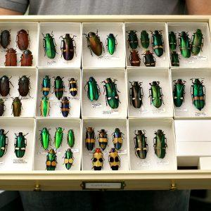 Entomology storage solutions