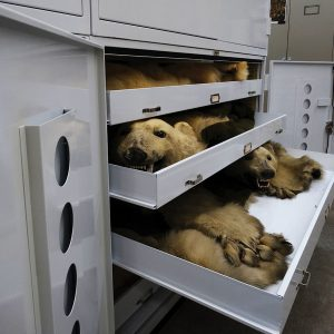 Conservation cabinets for museums