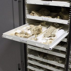 Museum drawers for fossil artifact storage