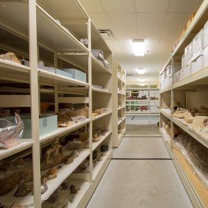 open shelving stores museum collections