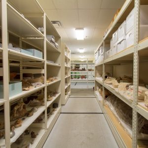 Open wide-span shelving for museum artifacts