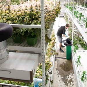 Mobile Shelving in an indoor grow facility