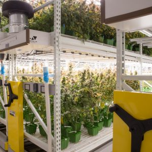 Compact shelving stores plants in an indoor grow facility