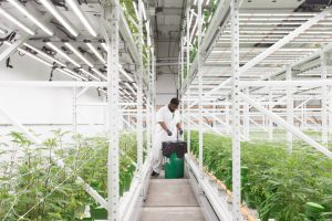 Indoor grow facilities utilize high-density storage