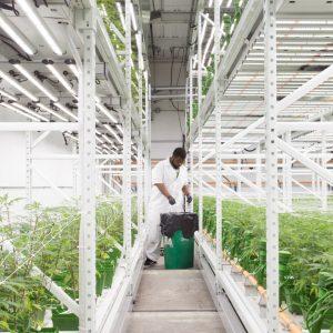 Indoor grow facilities utilize high-density storage