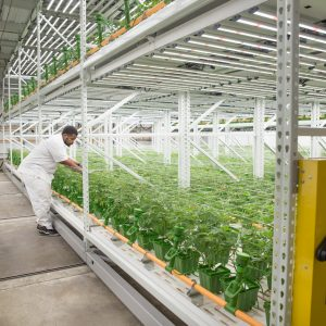 Wide-span shelving allows plenty of storage place for plants