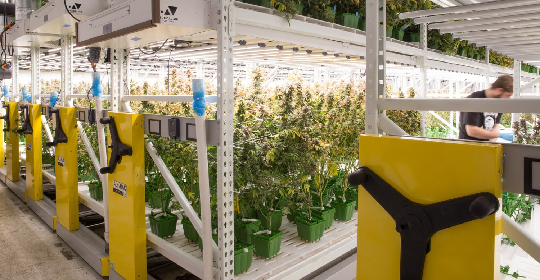 Seeding Cannabis & Hemp Success: Vertical Grow Solutions