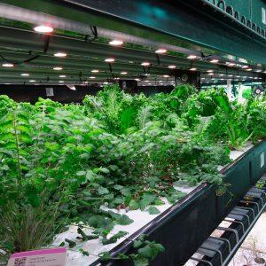 urban-farm-hydroponic-grow-operation-racking-on-rails