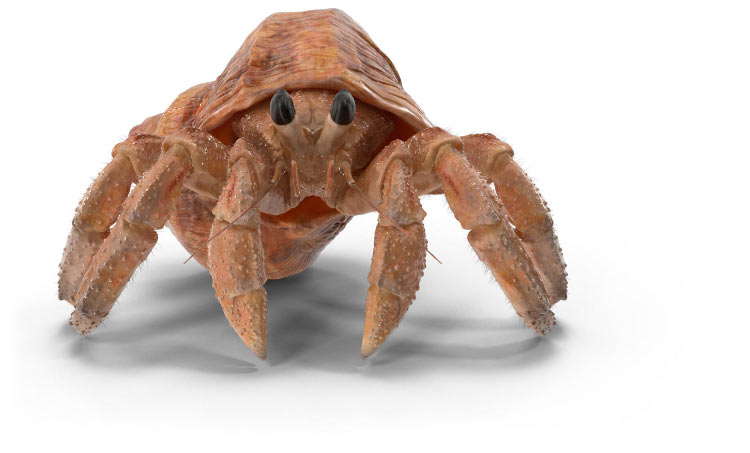 Patterson Pope | Hermit Crab